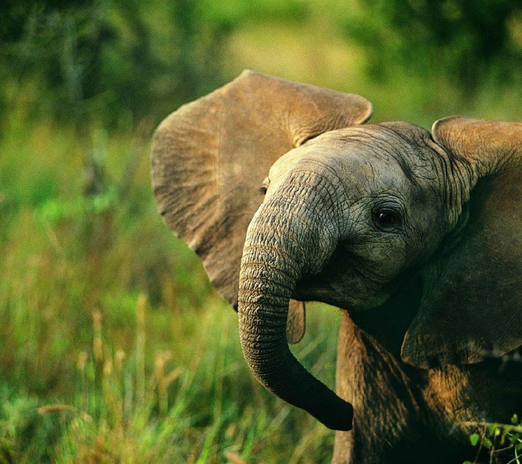 Descargar Baby Elephant HD Wallpapers para escritorio | animales bebés