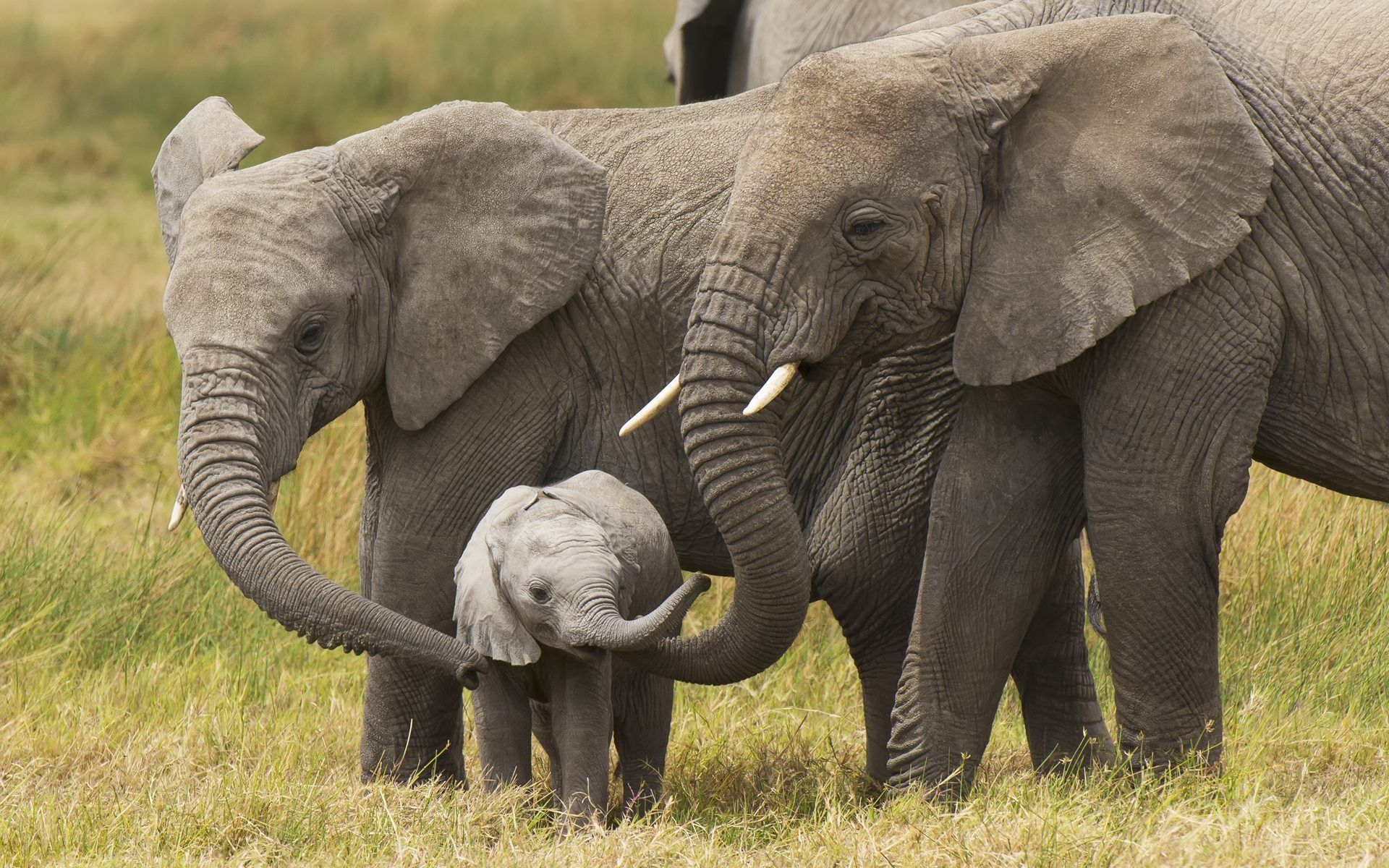 Cute Baby Elephant Wallpapers HD | Disney | Fondo de pantalla de elefante
