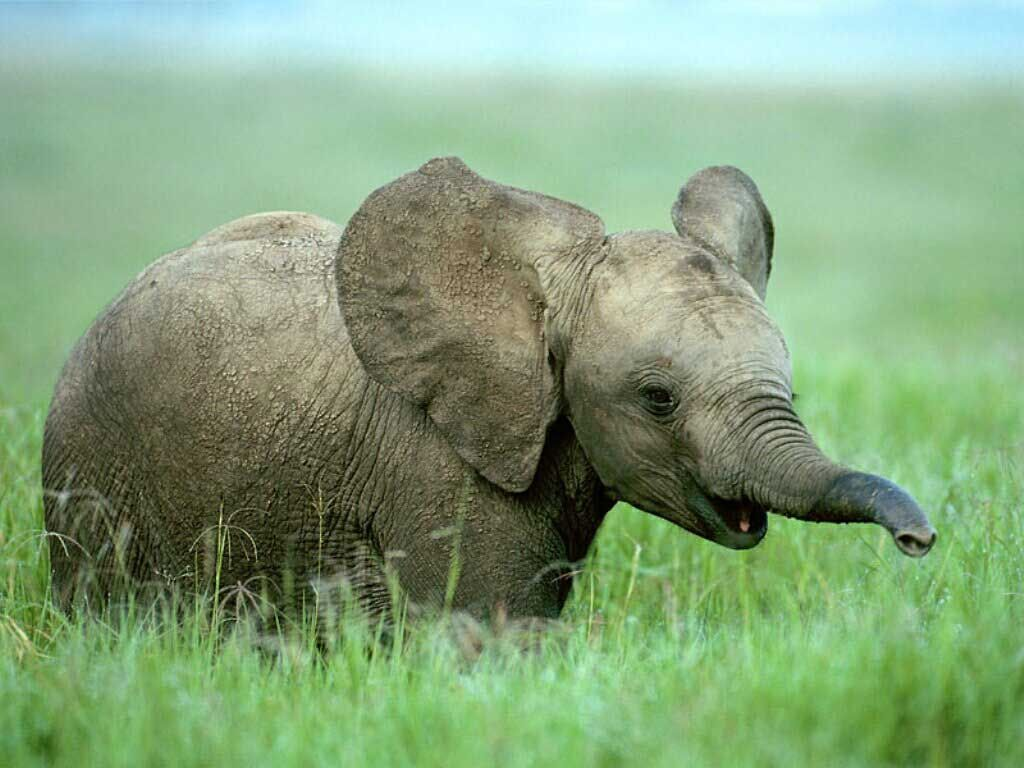 HD Baby Elephant Fondos de pantalla y fotos | HD Animals Wallpapers