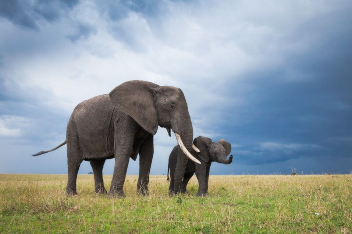Descarga gratis Cute Elephant Babies Wallpapers [1155x770] para tu