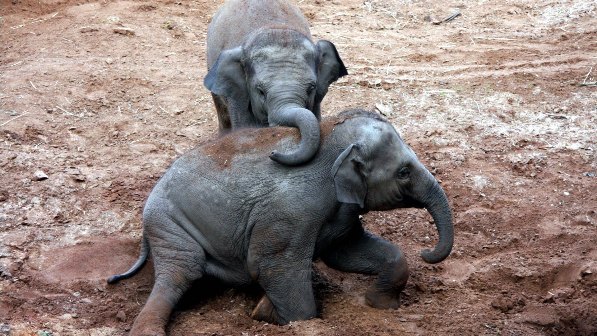 Desktop hd cartoon baby elephant images