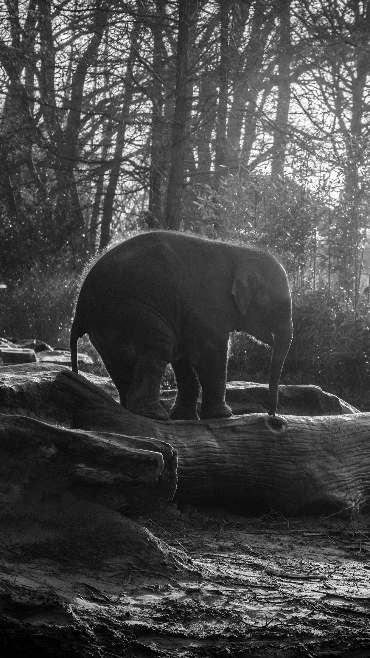 iPhone6papers - mw67-elephant-dark-bw-animal-cute-nature-baby