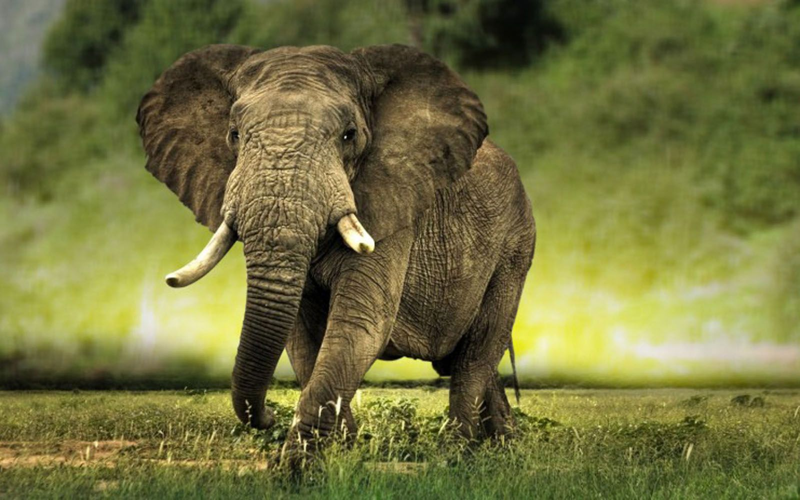 Baby Elephant Wallpapers Fondos de pantalla 1600x1000