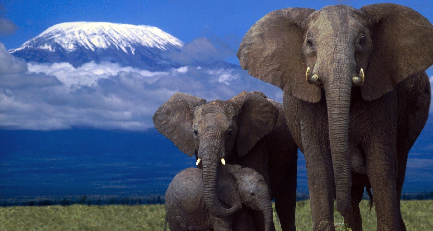 Baby Elephant Wallpaper Pictures en Animal Picture Society