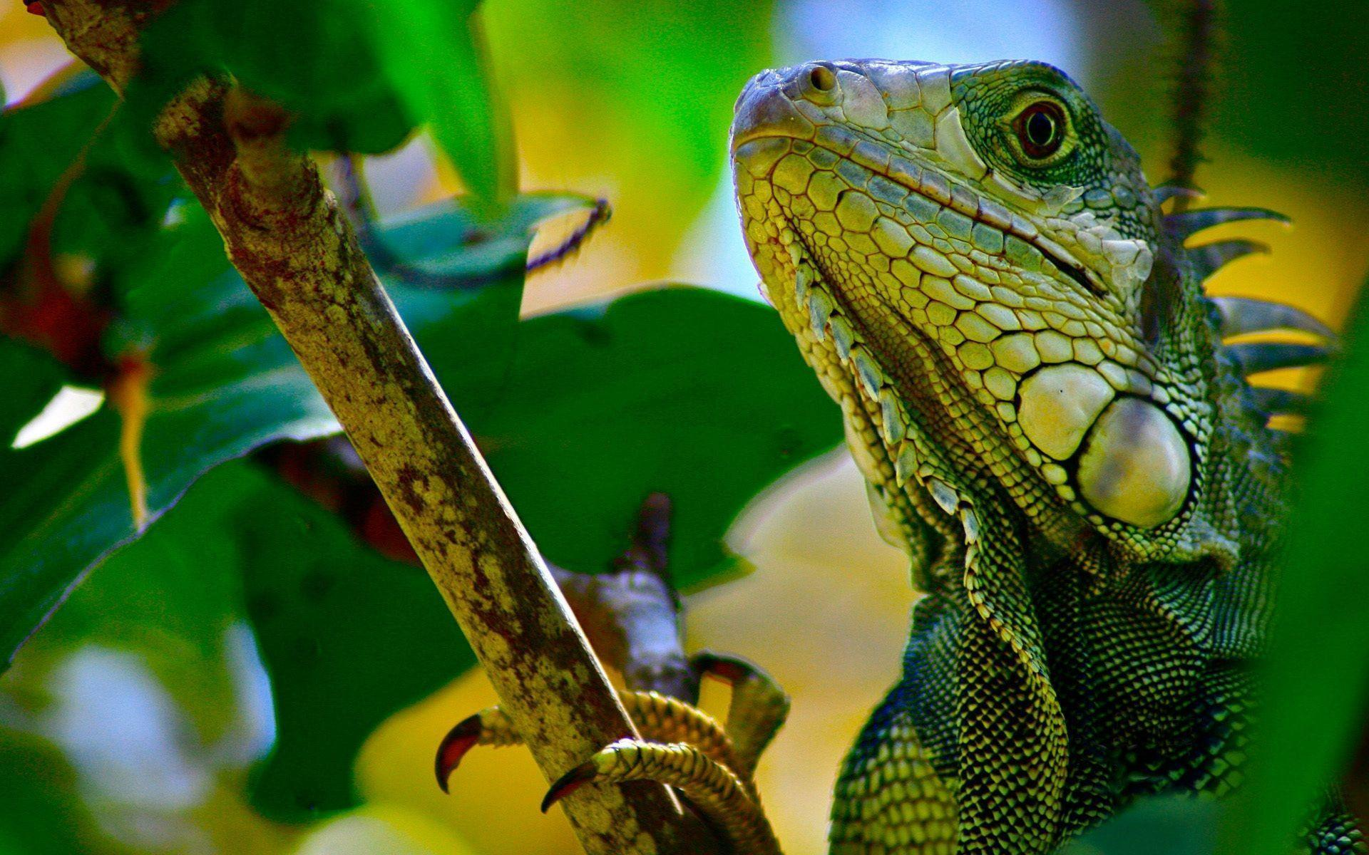 Reptile Wallpapers