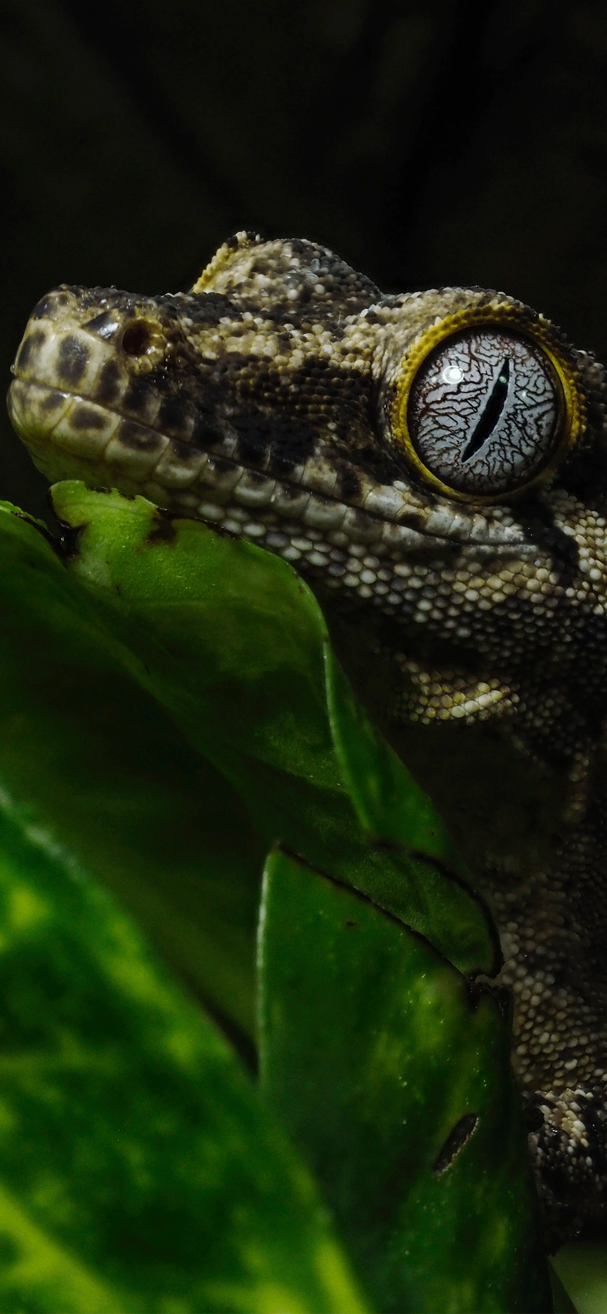 Reptiles Wallpaper para iPhone X, 8, 7, 6 - Descarga gratis en 3Wallpapers