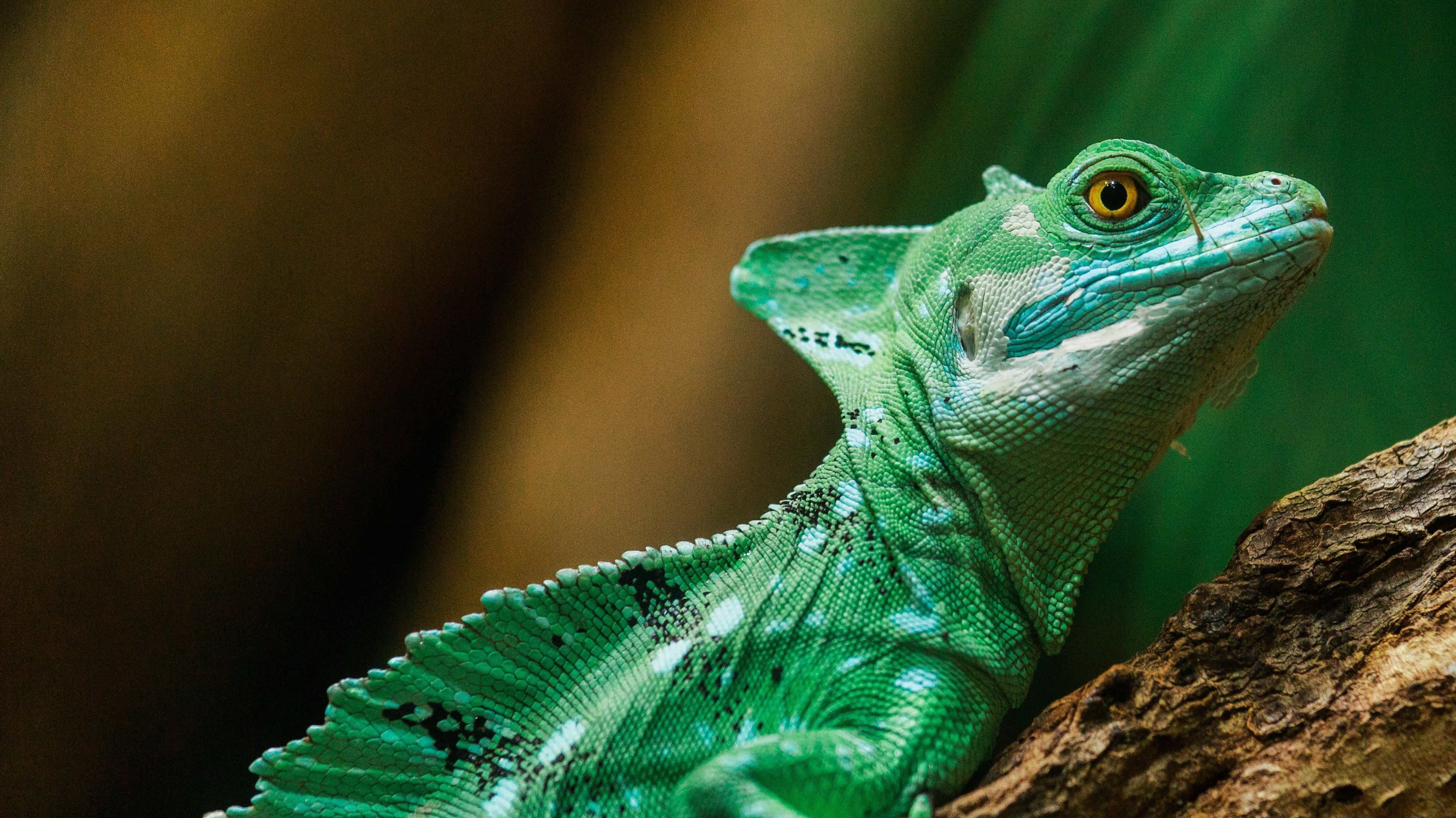 Green Reptile 4K Fondo de pantalla | HD Wallpapers