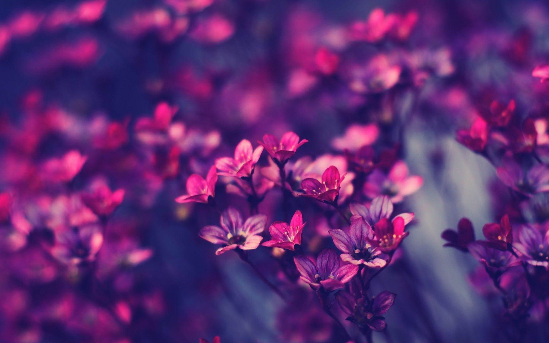 1920x1200 55+ Purple Flowers HD Wallpapers - Descargar