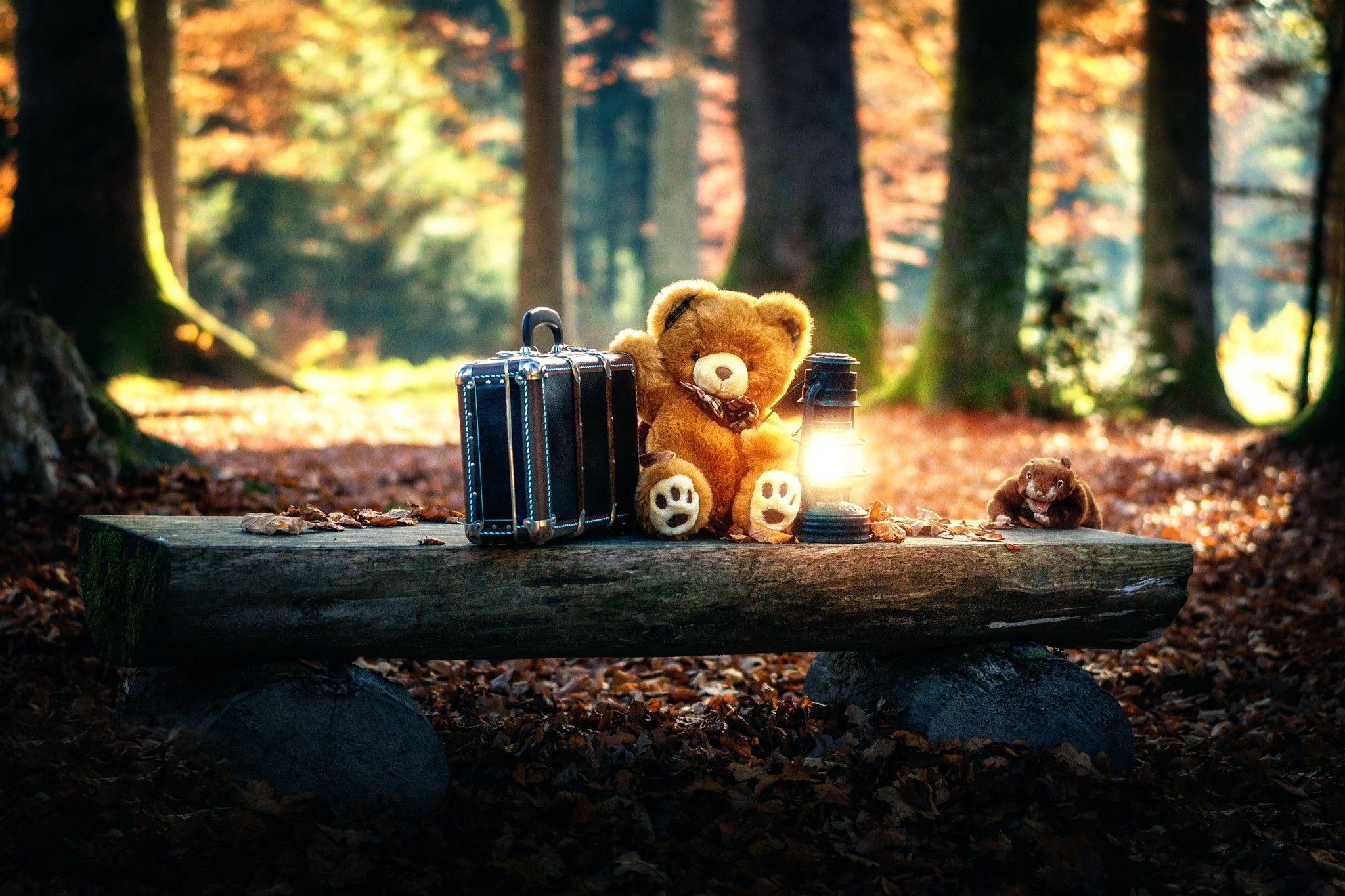 Teddy Bears Cute Alone in Forest, HD Cute, 4k Wallpapers, Images