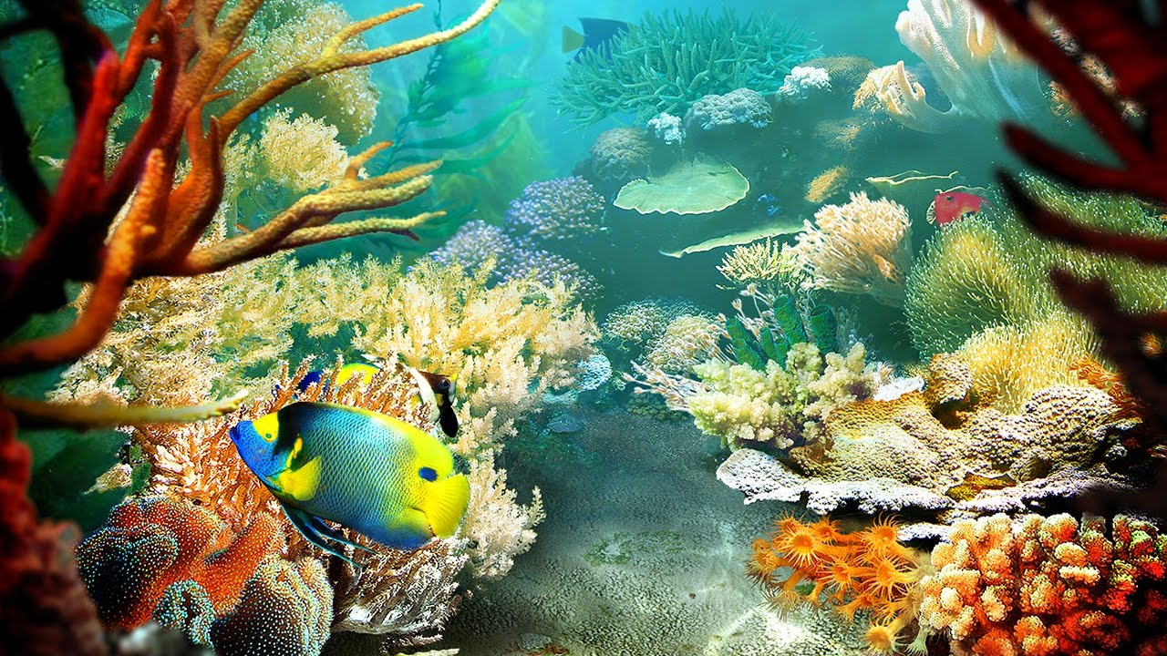 Tropical Fish 3D Screensaver y Live Wallpaper HD