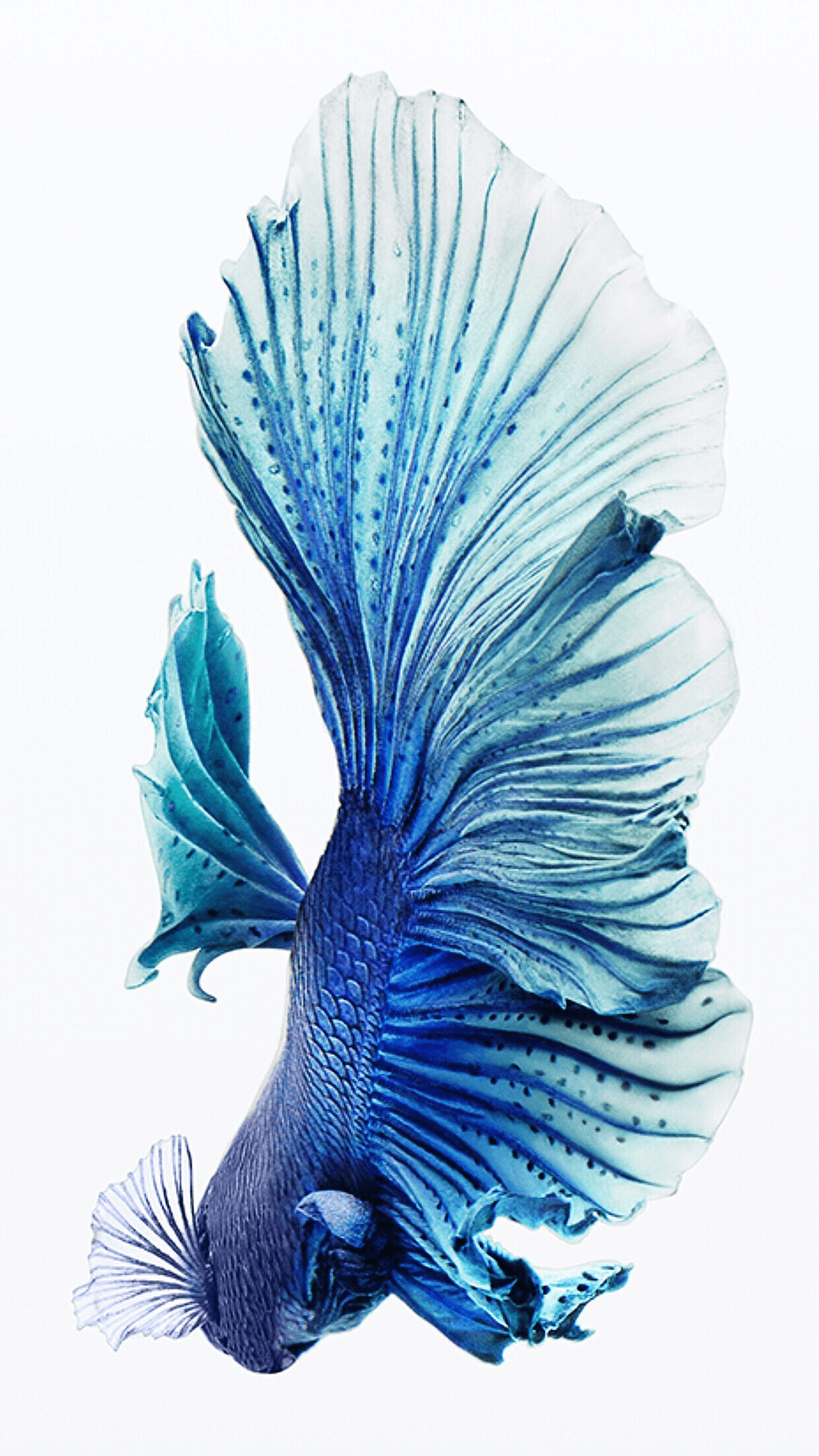 iPhone Fish Wallpapers descarga gratuita