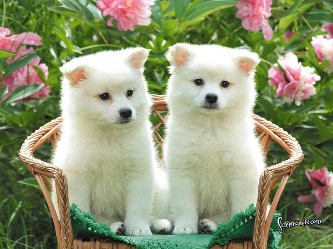 Cute Puppy Wallpaper Dogs HD Wallpapers Pinterest Perro | Habitación de Lucy