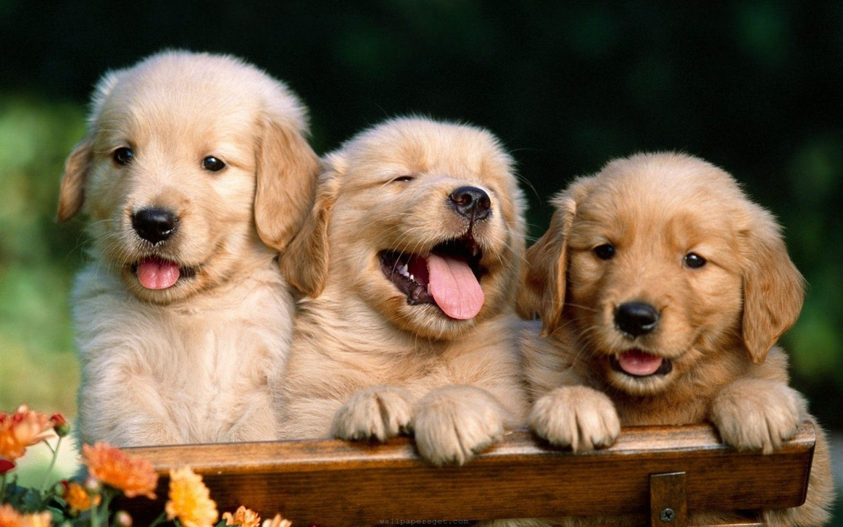 Cute Dog Wallpapers - Mejores fondos de pantalla de Cute Dog gratis - WallpaperAccess