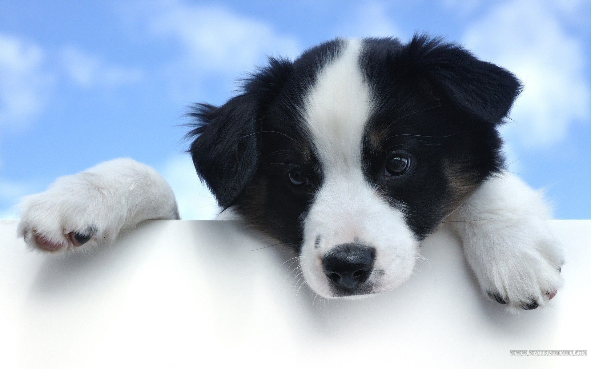 Cute Dog Wallpapers About Doggies 1920x1200