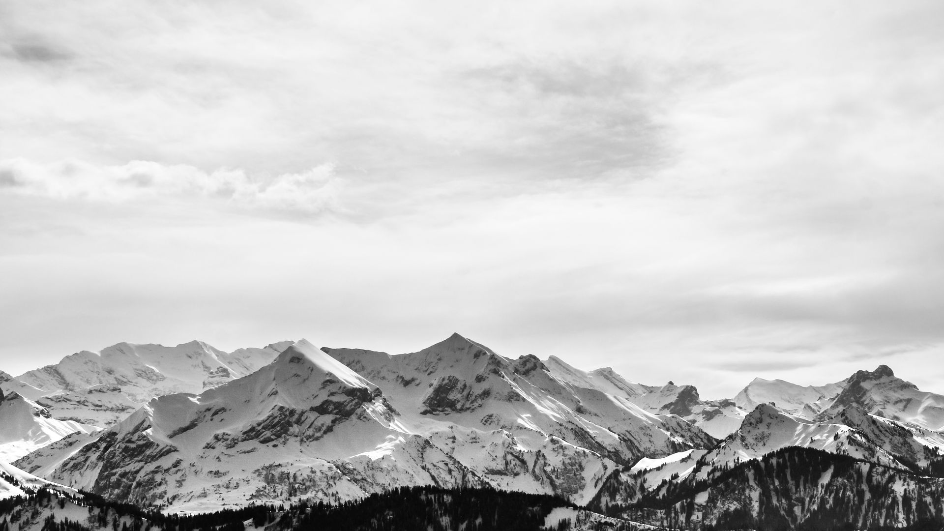 Bernese Mountain Wallpaper en blanco y negro - Wallpaper Stream