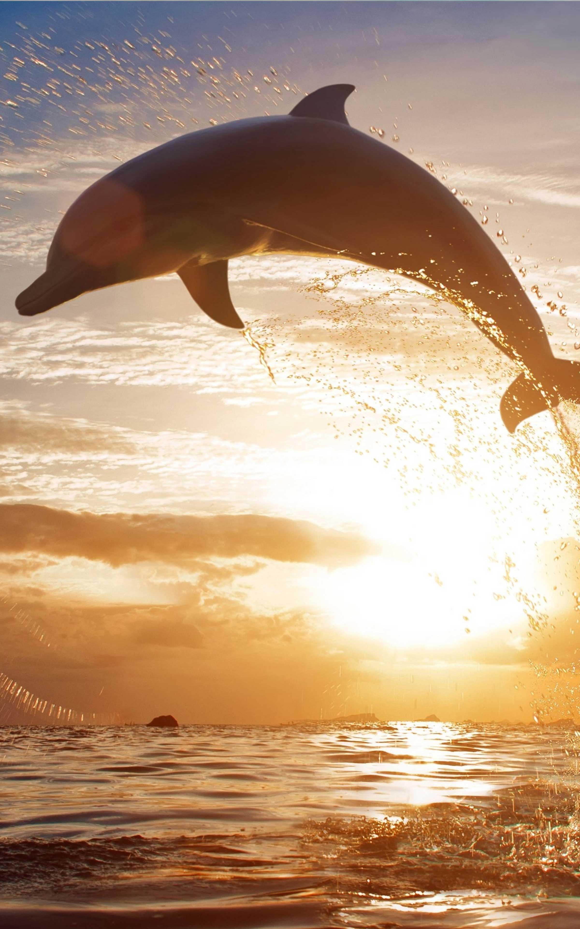 Dolphin Wallpaper - Best Cool Dolphin Wallpapers para Android - APK