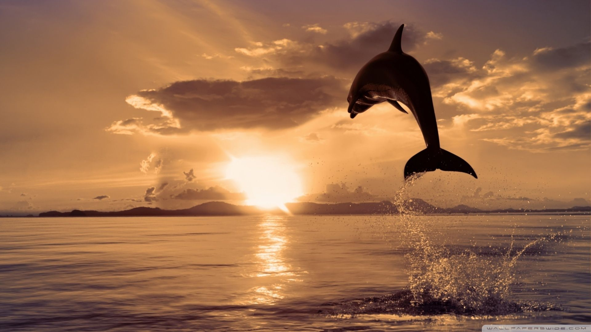 Dolphin Wallpapers Widescreen # 3XIIFNV - 4USkY