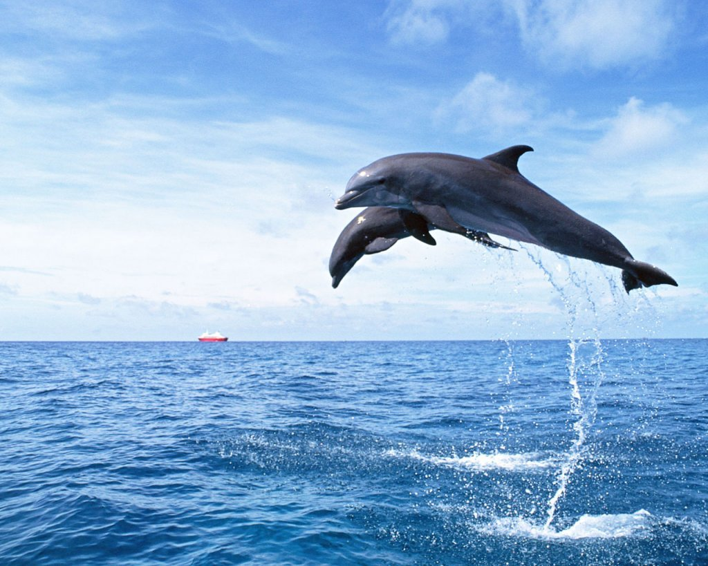 Cute Dolphin Wallpaper 10745 Hd Wallpapers In Cute - Imagesci.Com