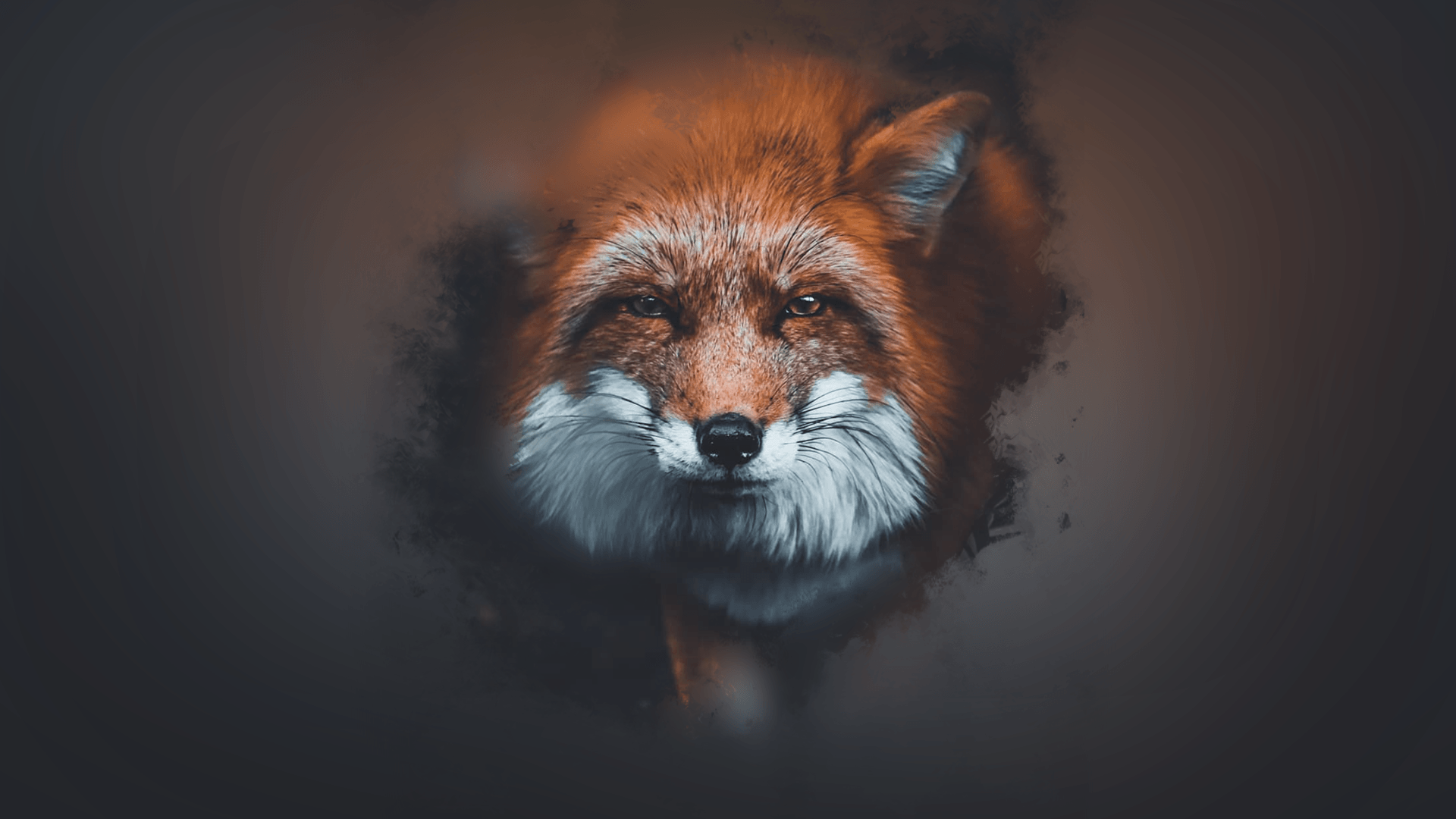 Fox wallpaper 1080p: fondos de pantalla