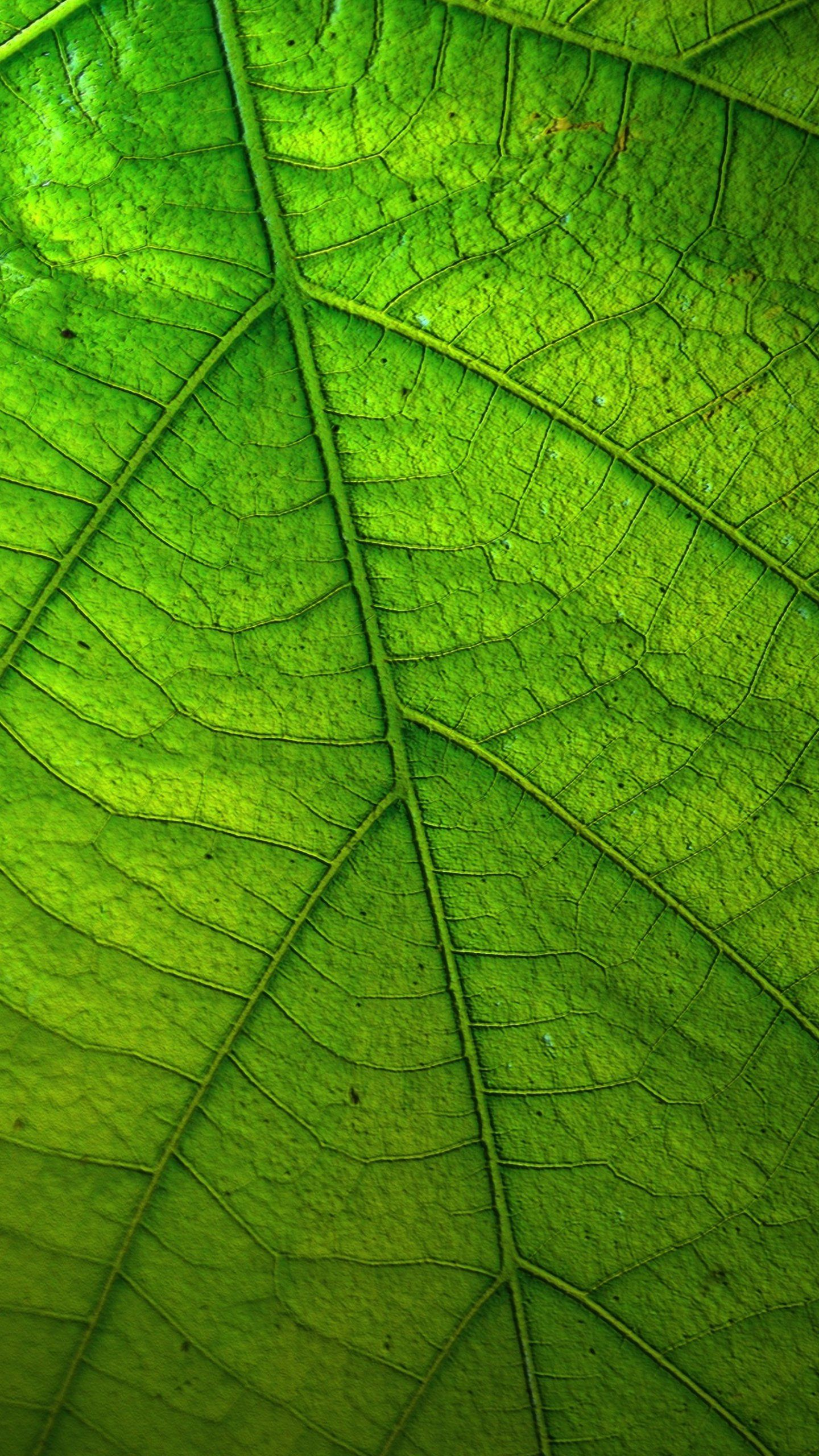 Green Leaf Wallpaper - Fondos de iPhone, Android y de escritorio