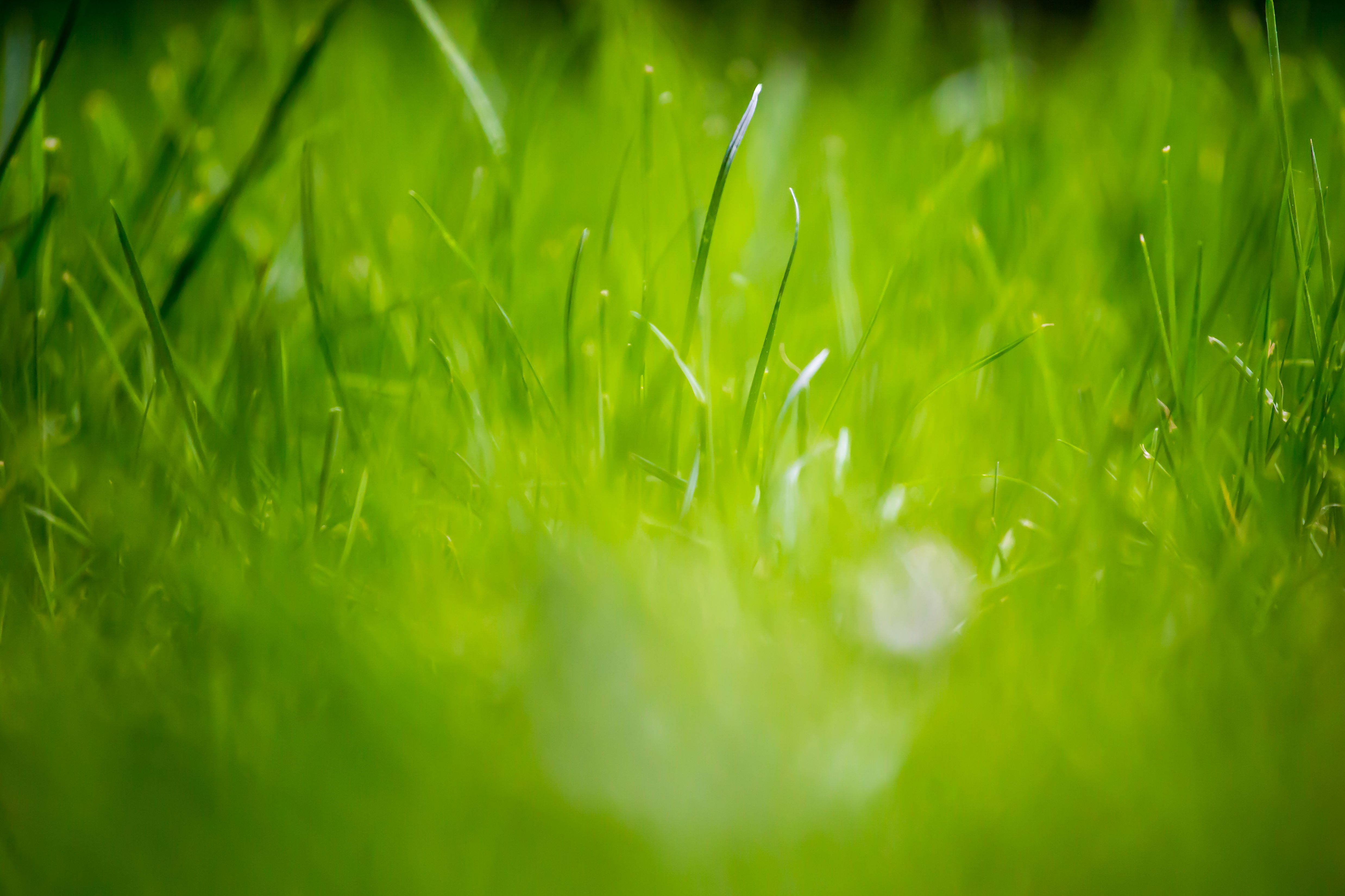 12 fondos de pantalla de beautiful green grass field HD
