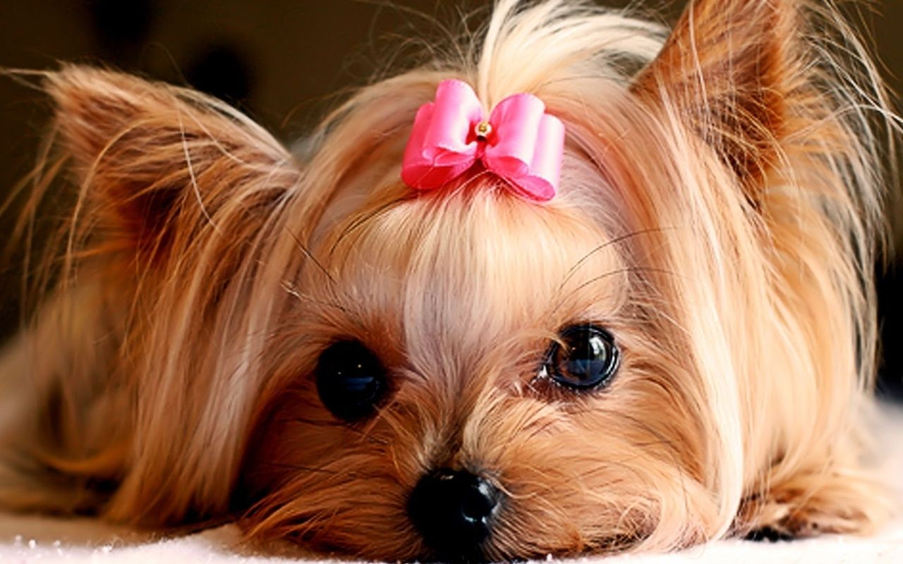 Cute Puppies :) - Puppies Wallpaper (22040893) - Fanpop