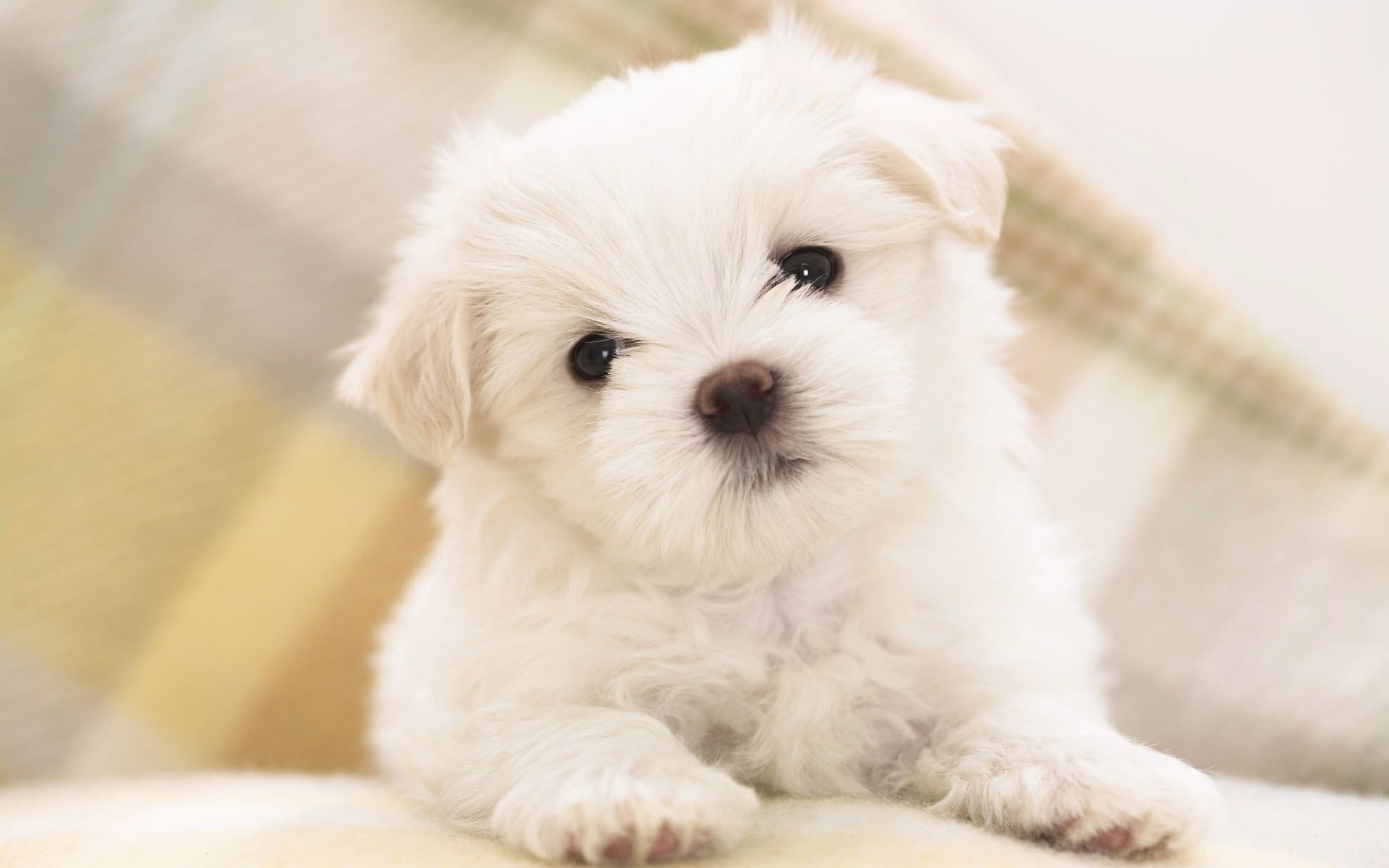 Top 10 Punto Medio Noticias | Free Puppy Desktop Wallpaper