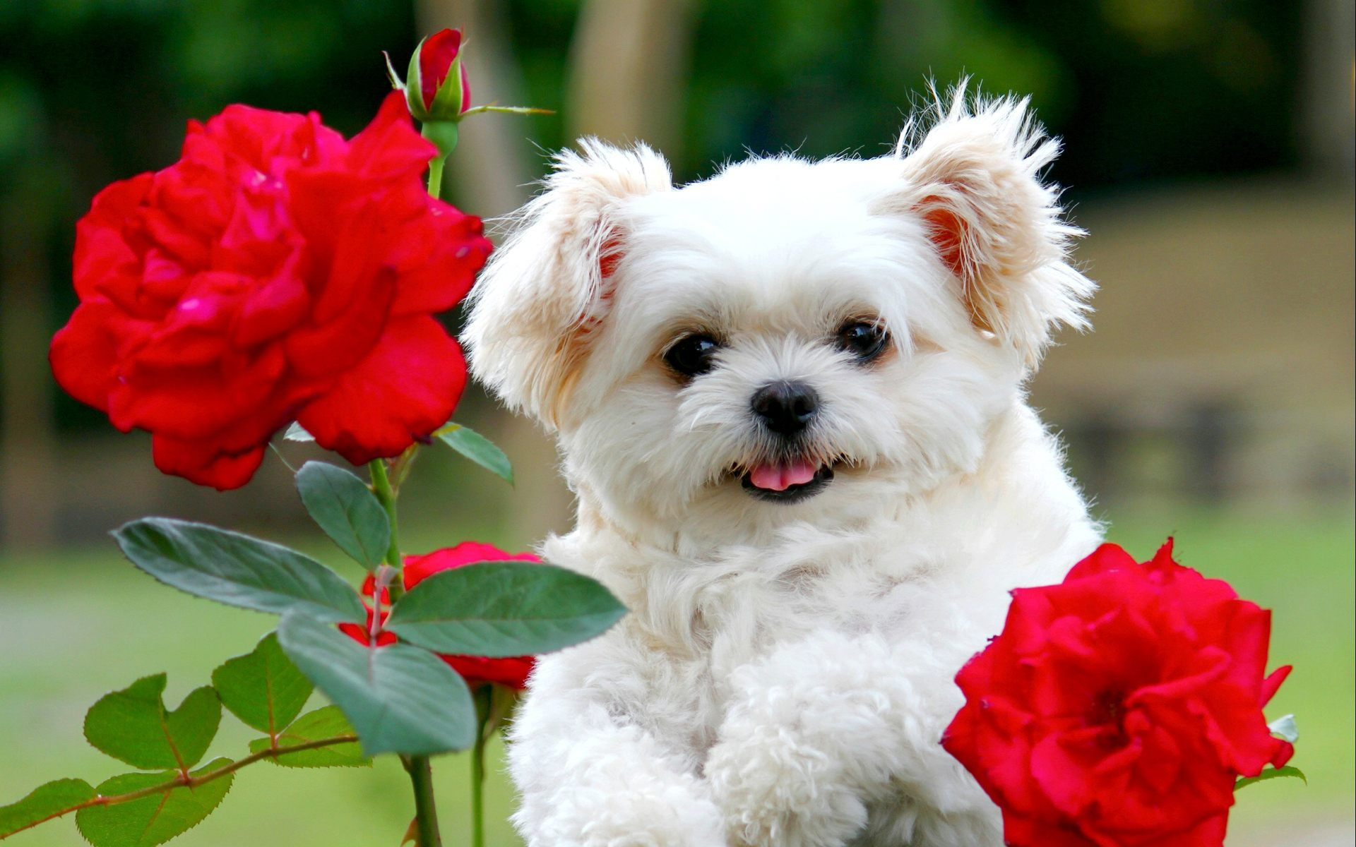 Cute puppies wallpapers - SF Wallpaper