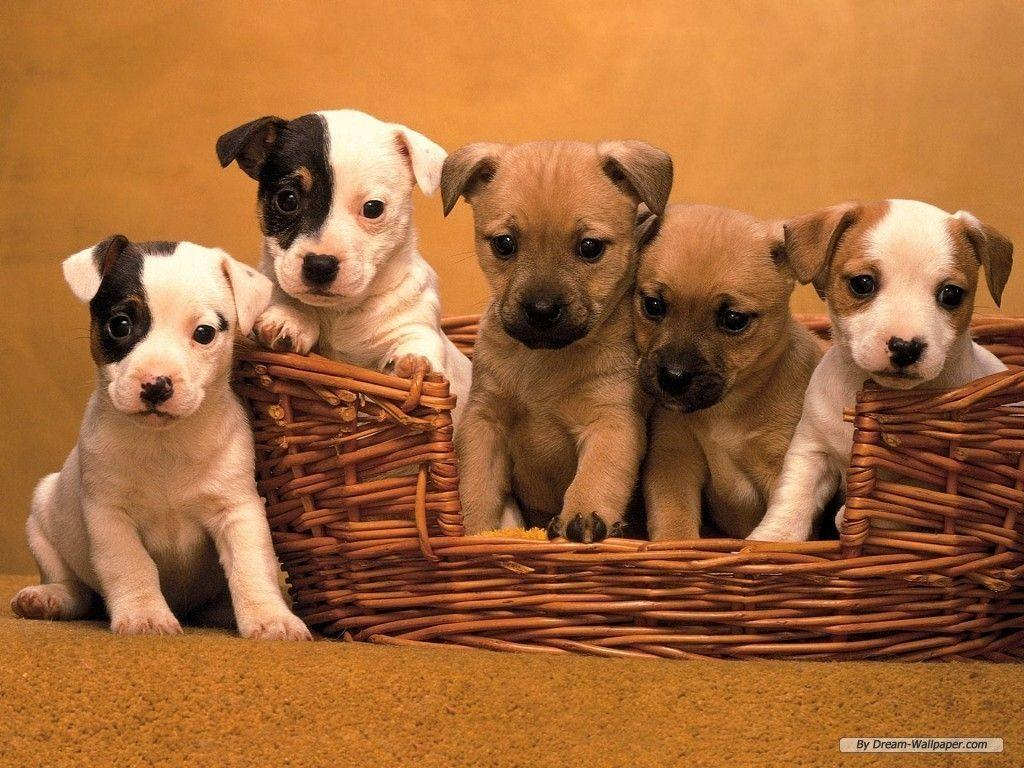 Cute Dogs And Puppies Wallpapers