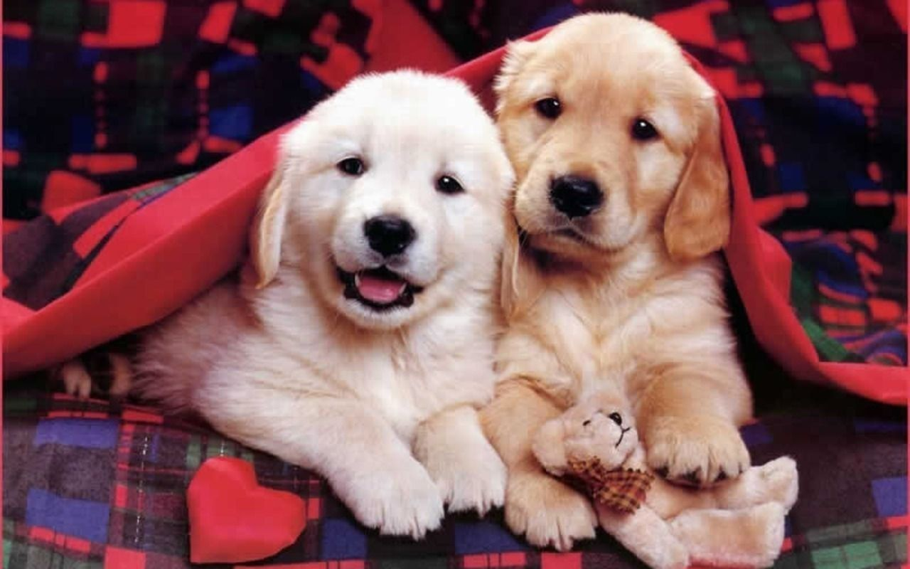 Cute Puppies Wallpaper Gallery