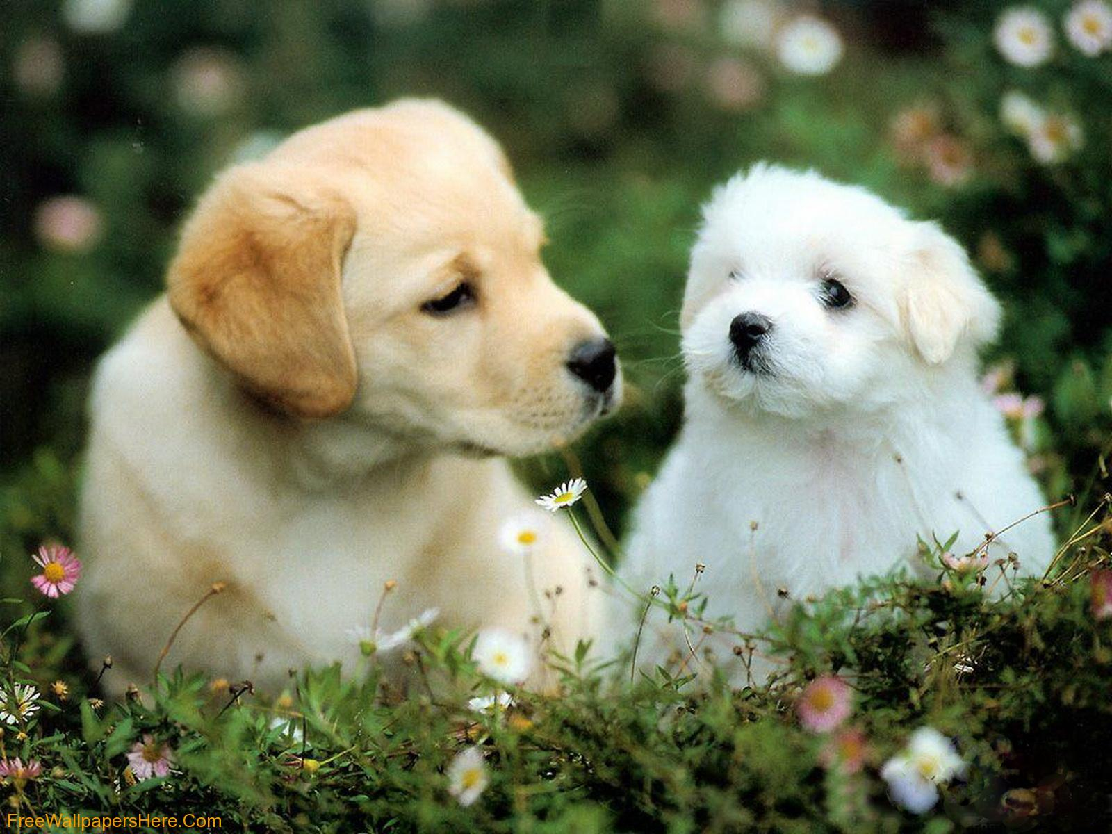 Descargar gratis HD Cute Puppy Dog Fondos de pantalla | The Quotes Land