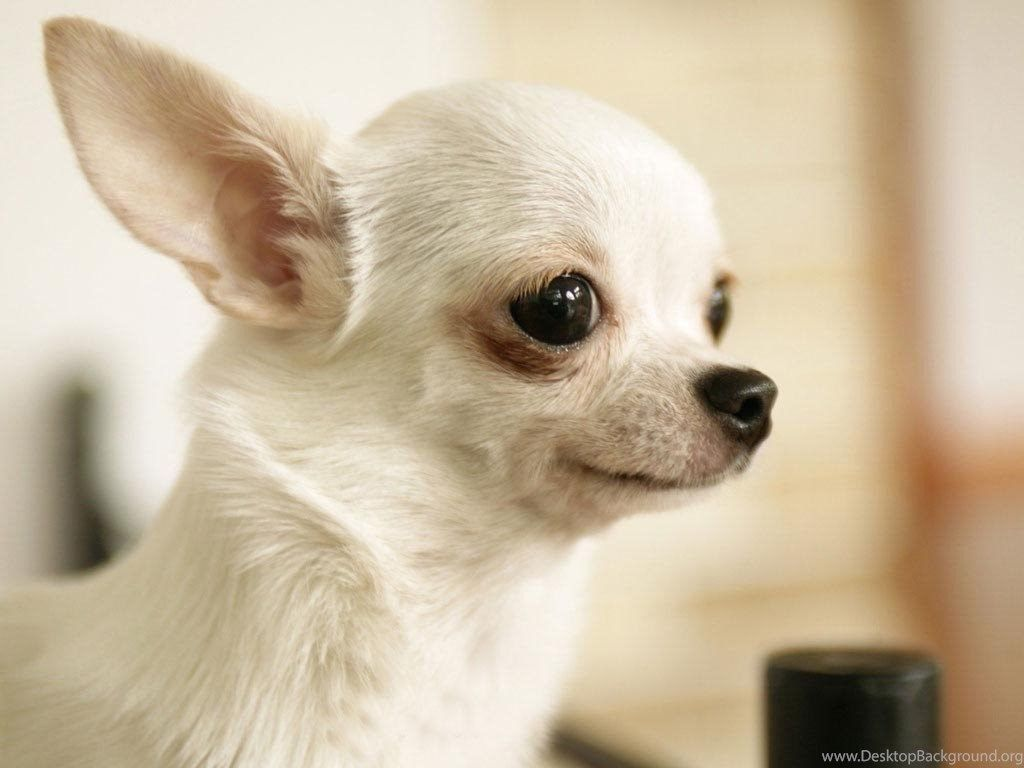 Animals Zoo Park: 8 fondos de pantalla de Cute Puppies, Cute Puppy Wallpapers