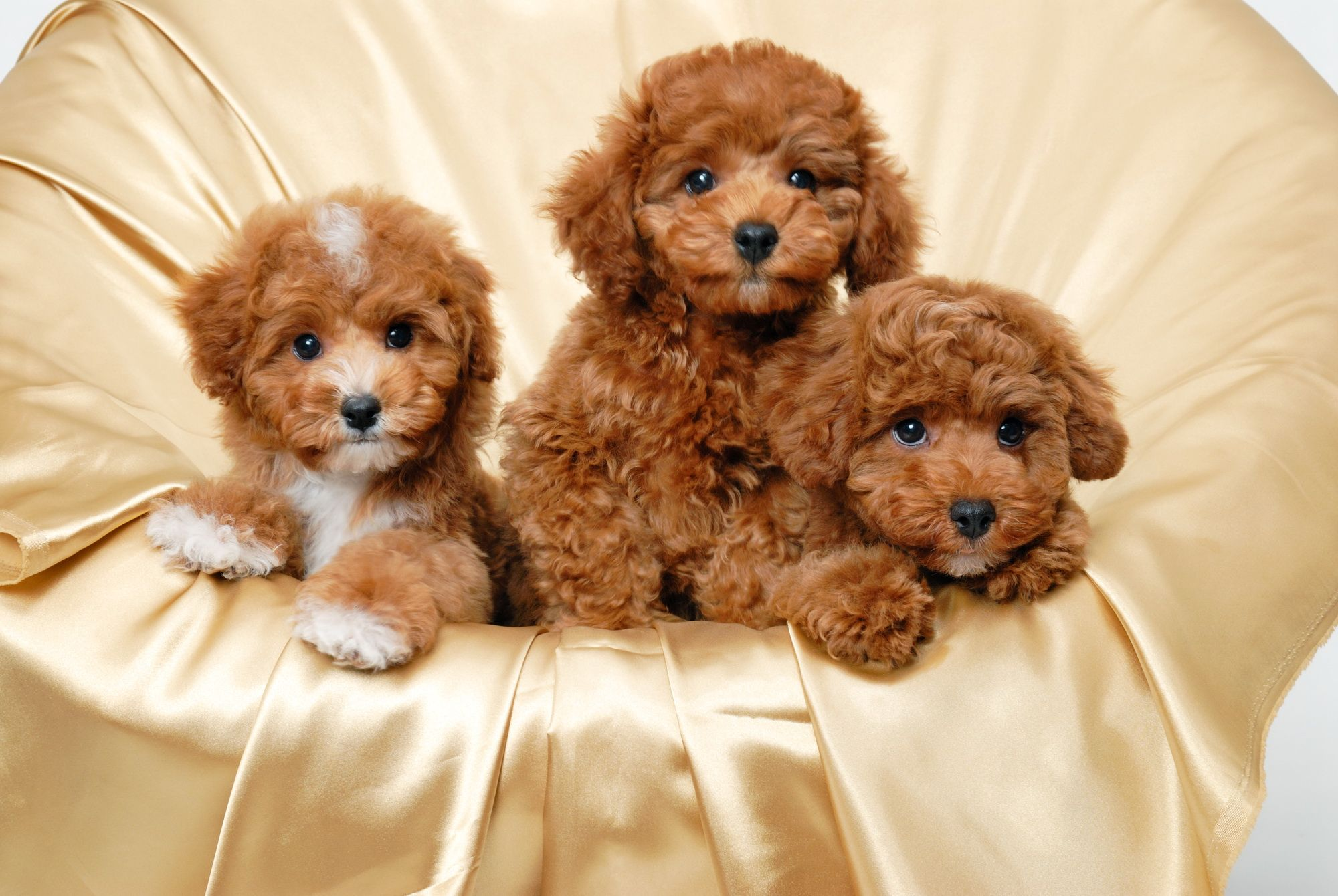 Descargar gratis Cute Puppy Wallpapers