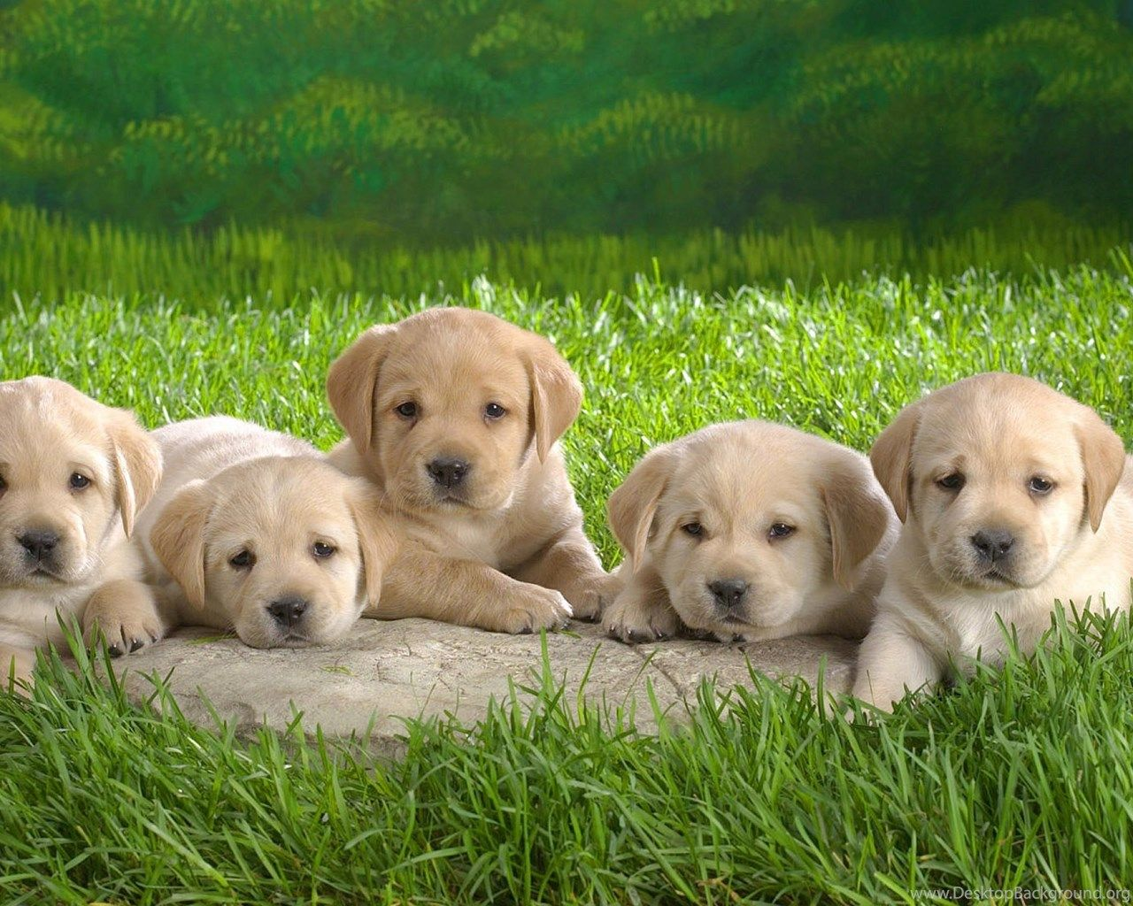 3d Puppy Wallpaper - Fondo de pantalla de Puppies para escritorio (# 118699) - HD