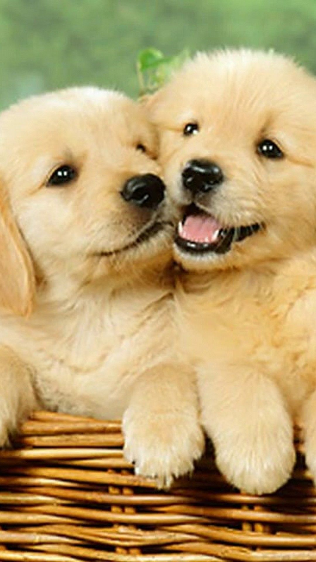 Cute Puppies Wallpaper Iphone | floweryred2.com