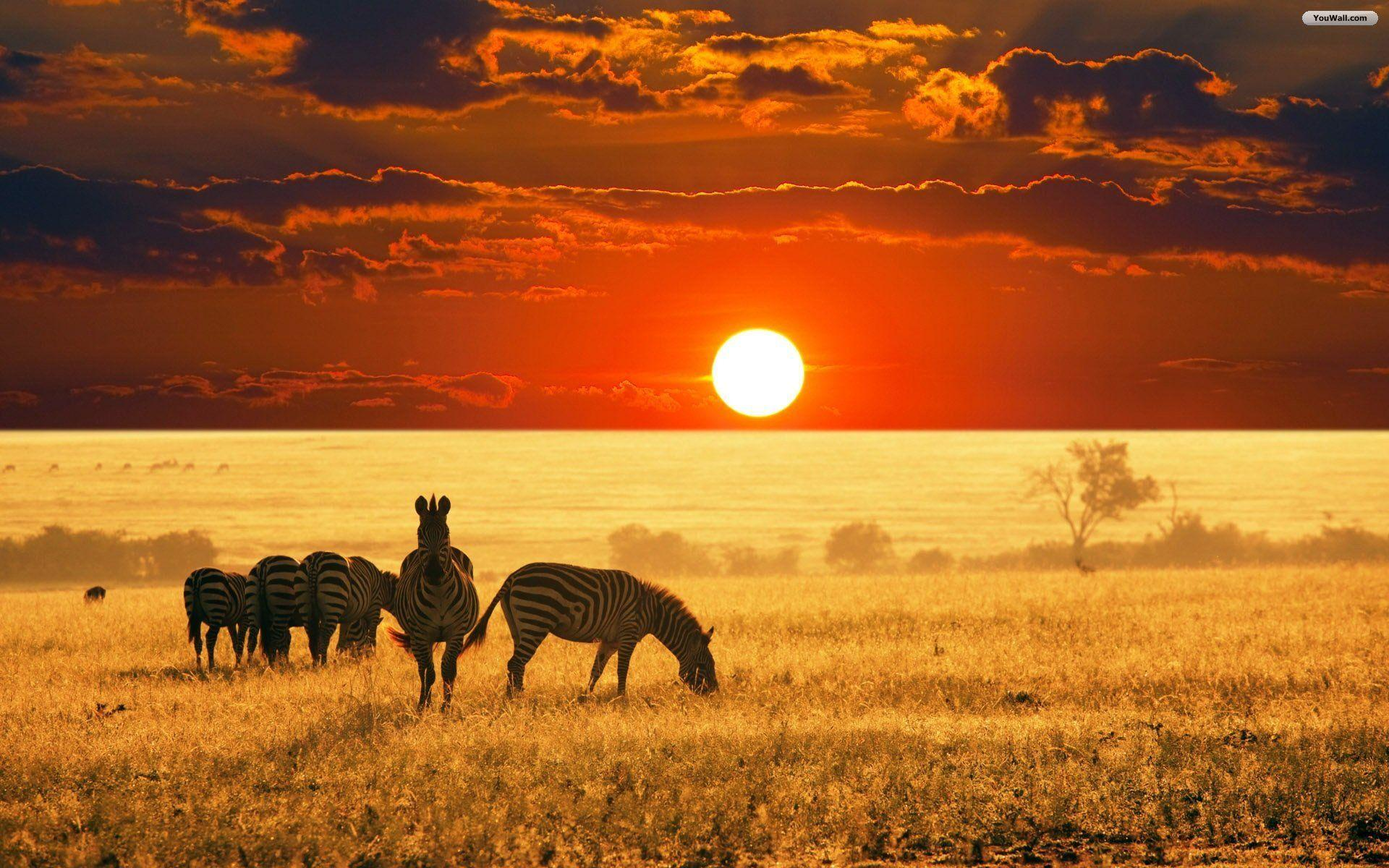 Africa Wallpapers