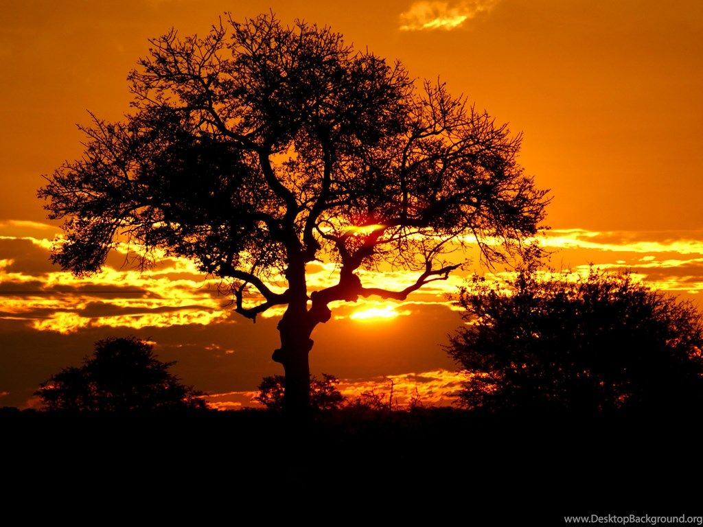 5 Kruger Park Sunset, Sudáfrica Wallpapers 1756 :: Sunset Field